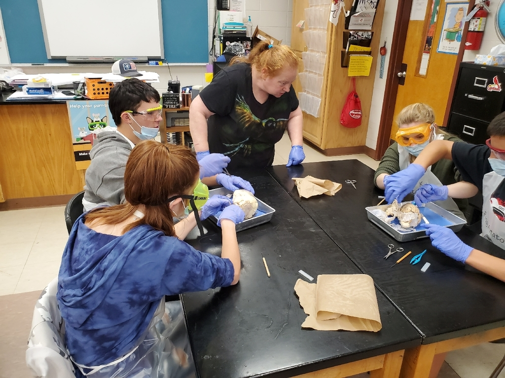 science dissection Biology class